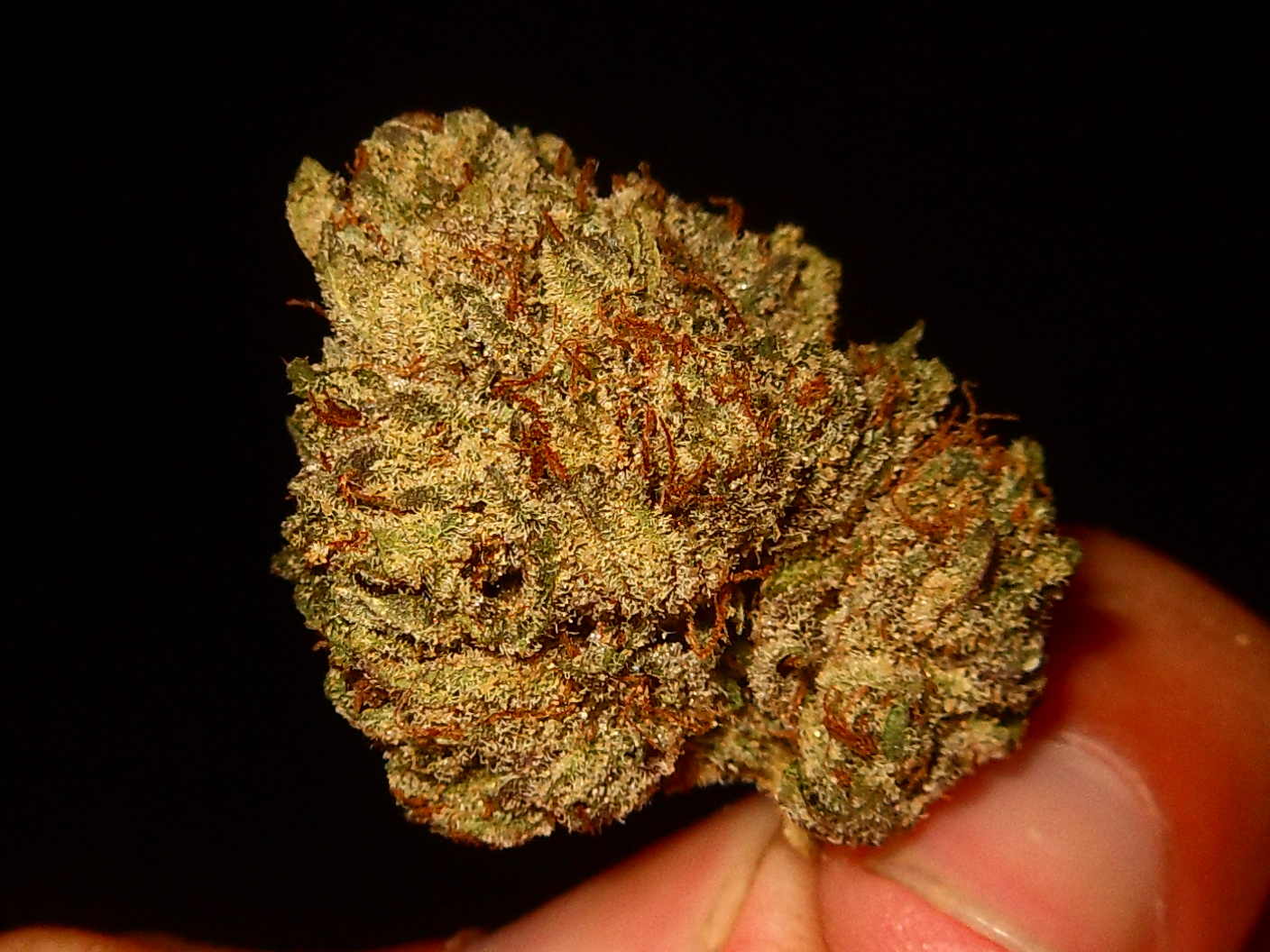 purple master kush pictures to pin on pinterest pinsdaddy