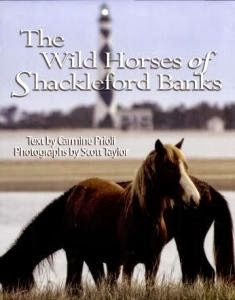Wild Horses of Shackleford