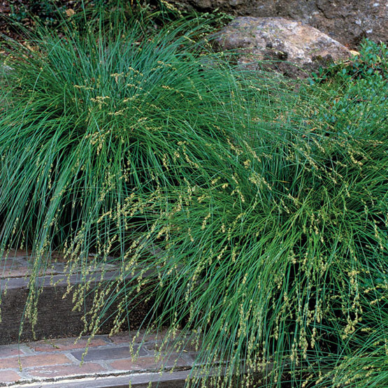 Modern garden design using ornamantal grasses sage for Modern grasses landscaping