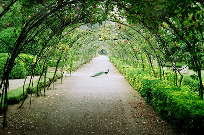 Garden tree tunnel