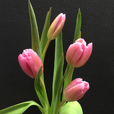 Pink tulips - Stein Your Florist Co.