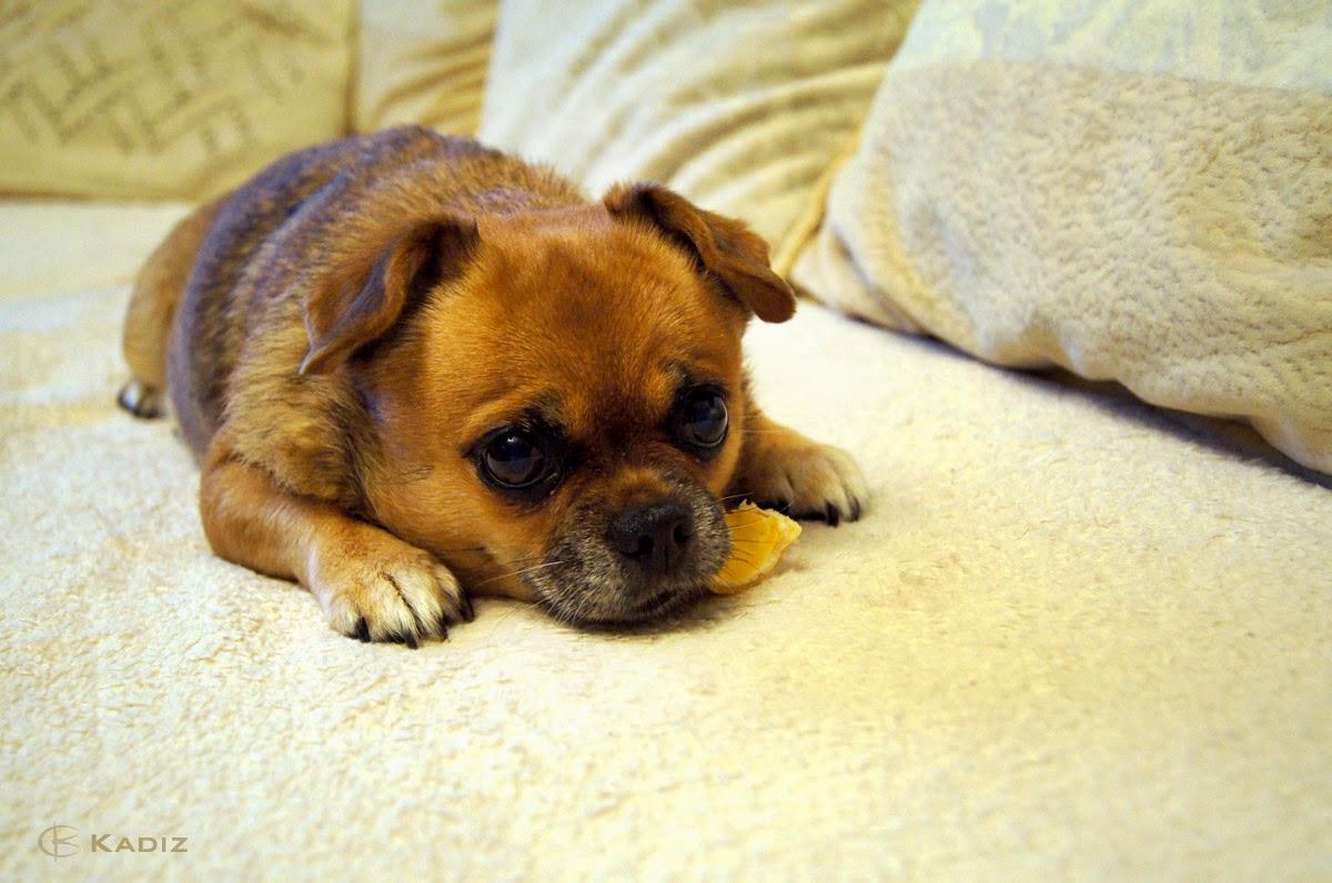 Усталая собачка