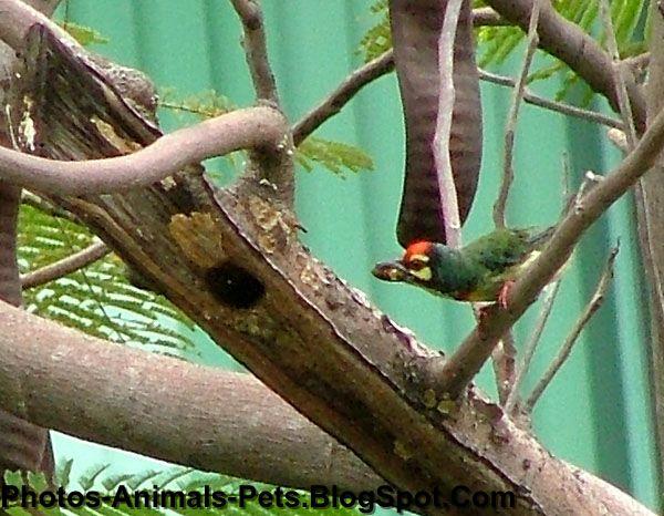 http://2.bp.blogspot.com/-1ZlFTo7bUps/Tet3h81REKI/AAAAAAAABPw/3jGPvXVdQWs/s1600/woodpeckers_0002.JPG