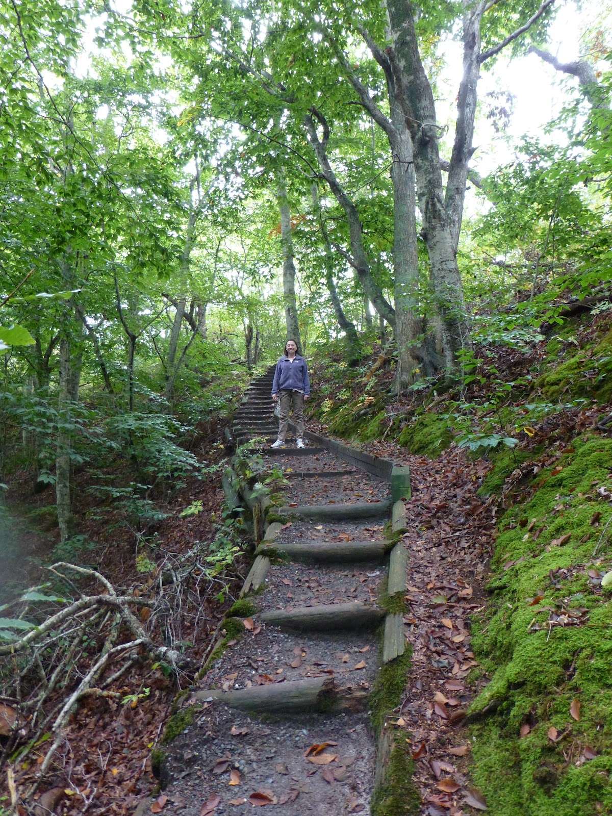 Beech Maple Forest ~ Mattie s and his fight against osteosarcoma