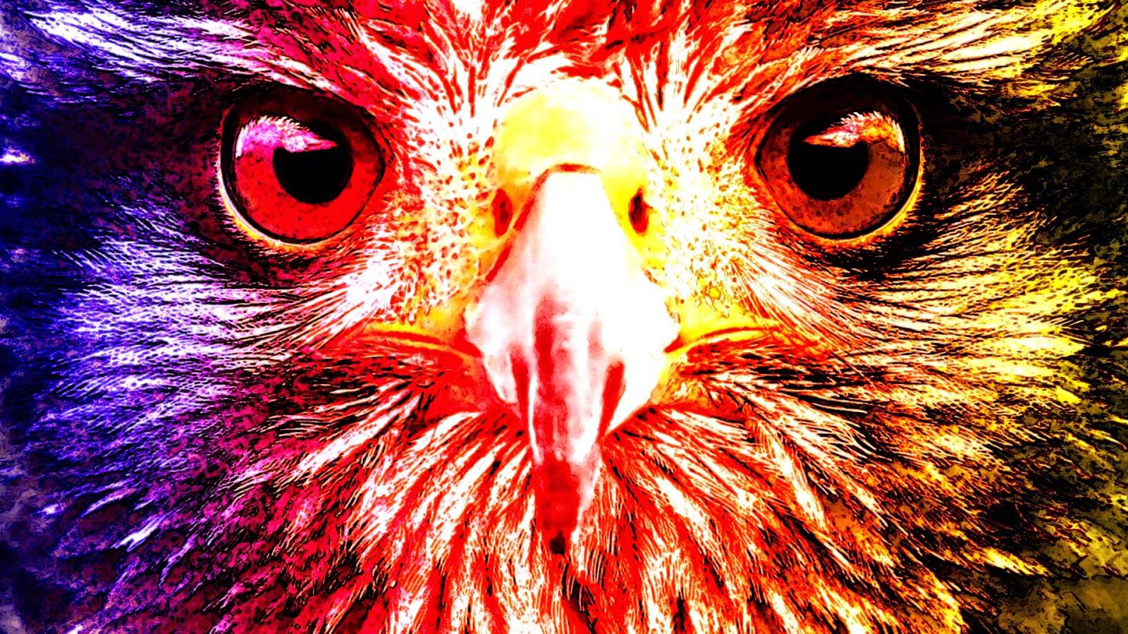 Sfondi desktop animali wallpapers animals digitalmatt for Foto desktop animali
