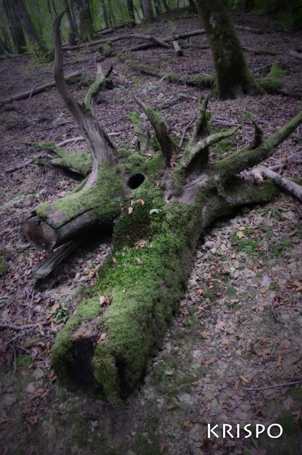 tronco en suelo de bosque junto restos de árboles