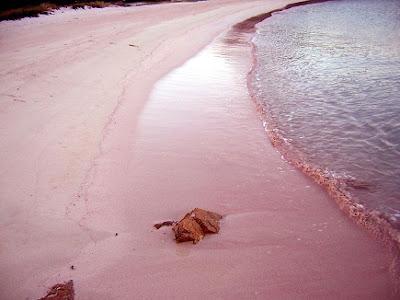 pink beach budelli island