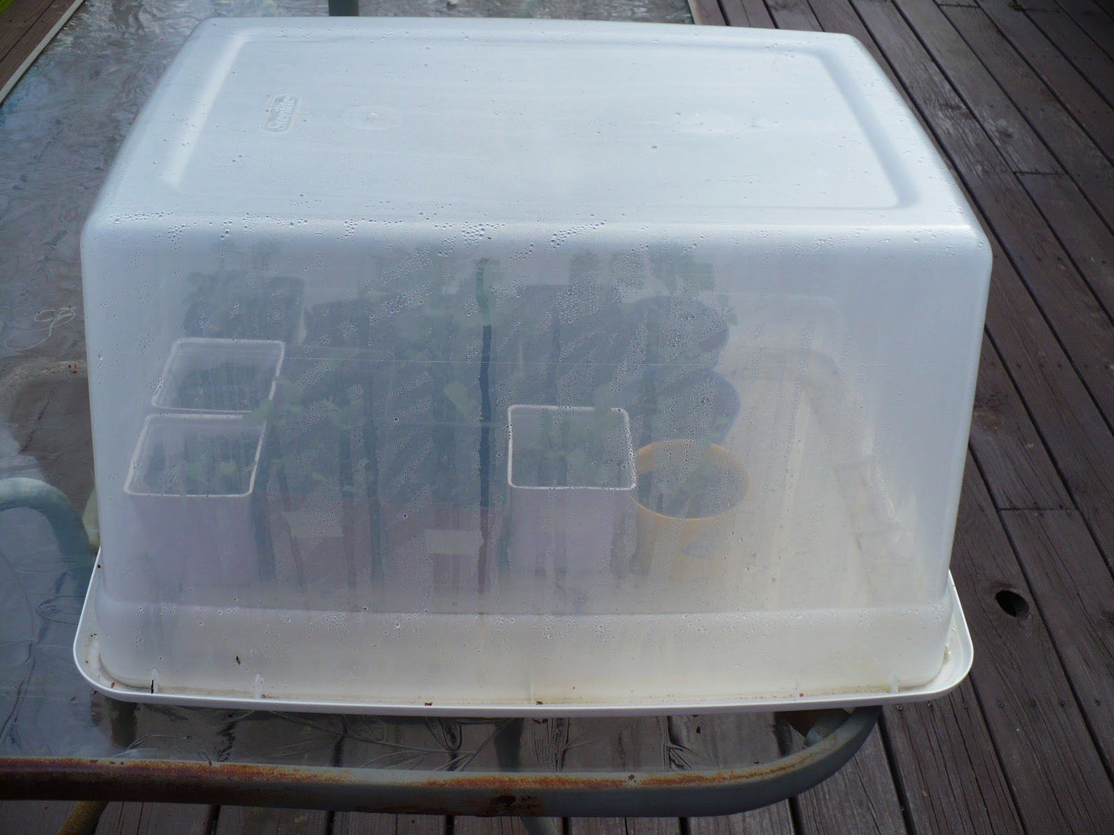 a cold frame easy quick cheap