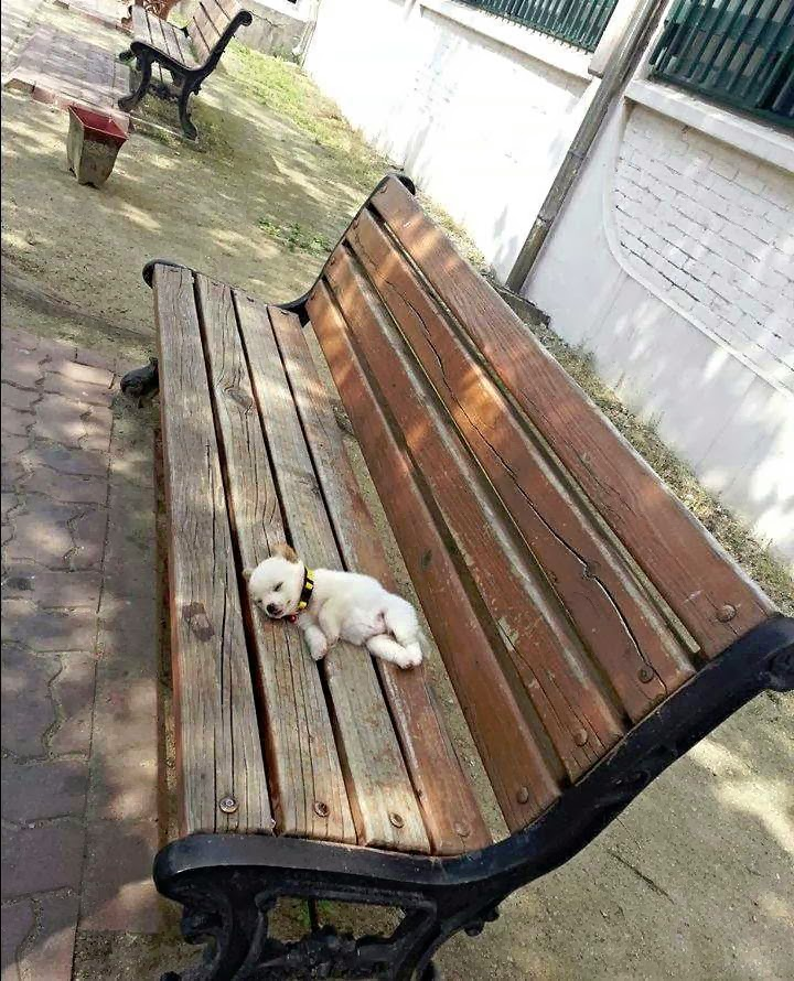 adorable dog pictures, cute little puppy sleeps in park bench