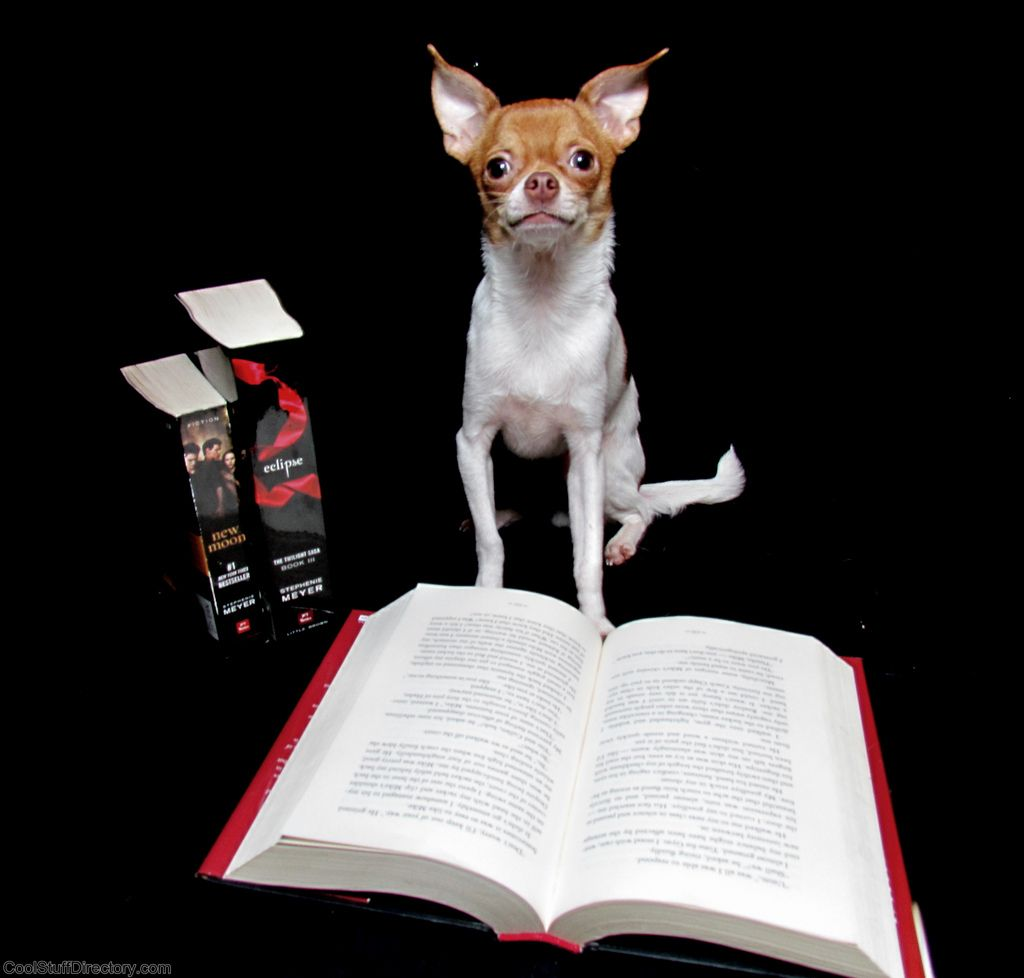 39. Chalupa Reading Twilight by Stephanie Exendine