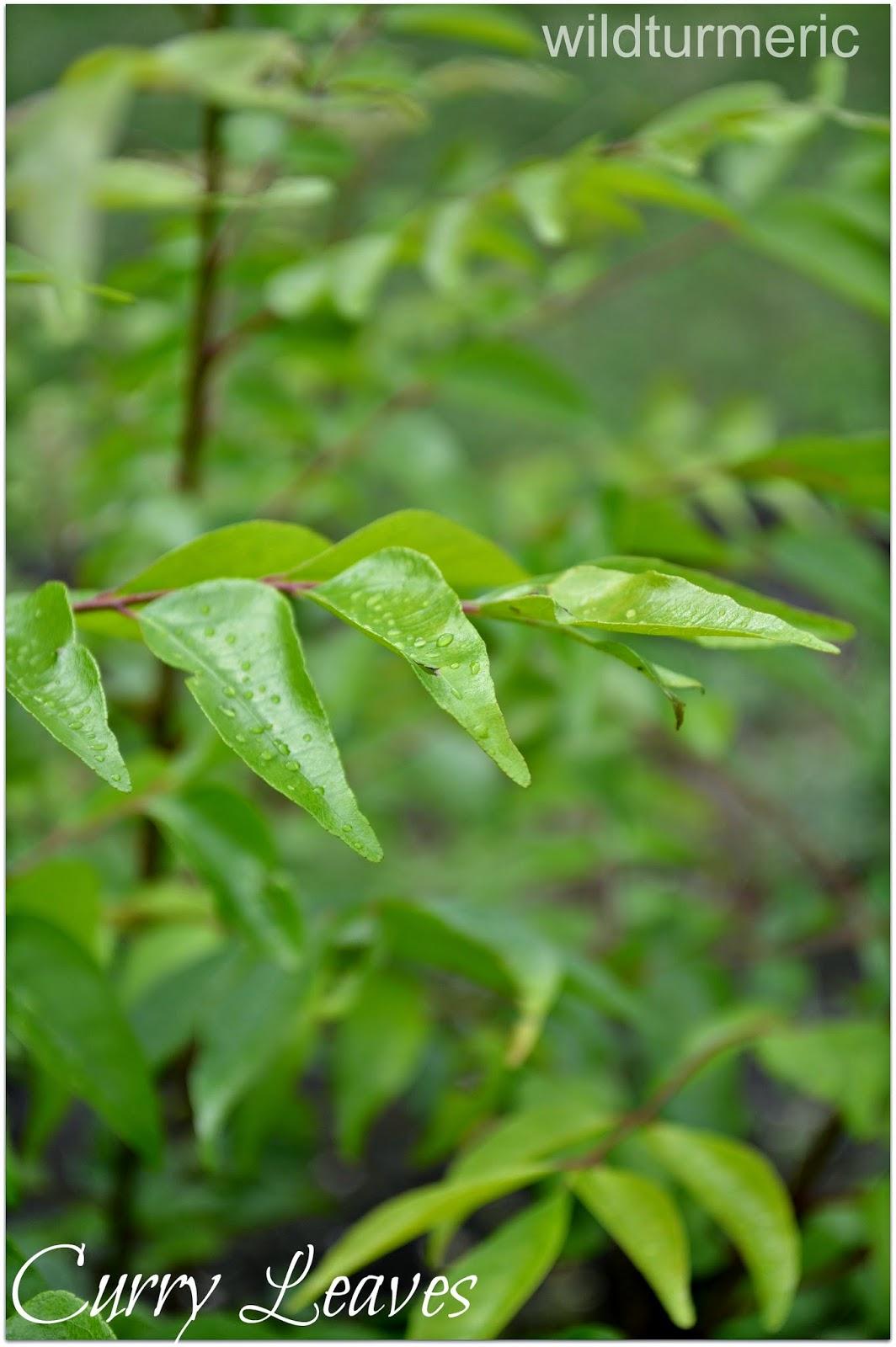 10 Herbs For Skin in Hindi