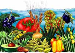 CORSO INTENSIVO di Alimentazione Naturale e Vegetariana Sana, L'unico in Italia.