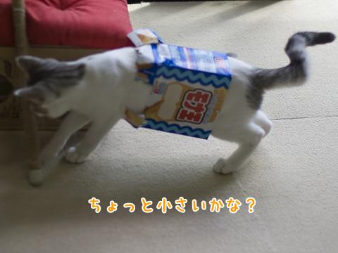 猫チューブトップ