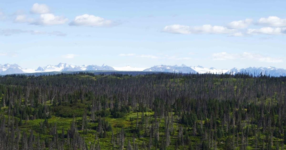 Alaska Backcountry Tours Atv Knik Side By Side  Person