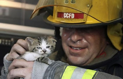 Animals Being Rescued Seen On www.coolpicturegallery.us