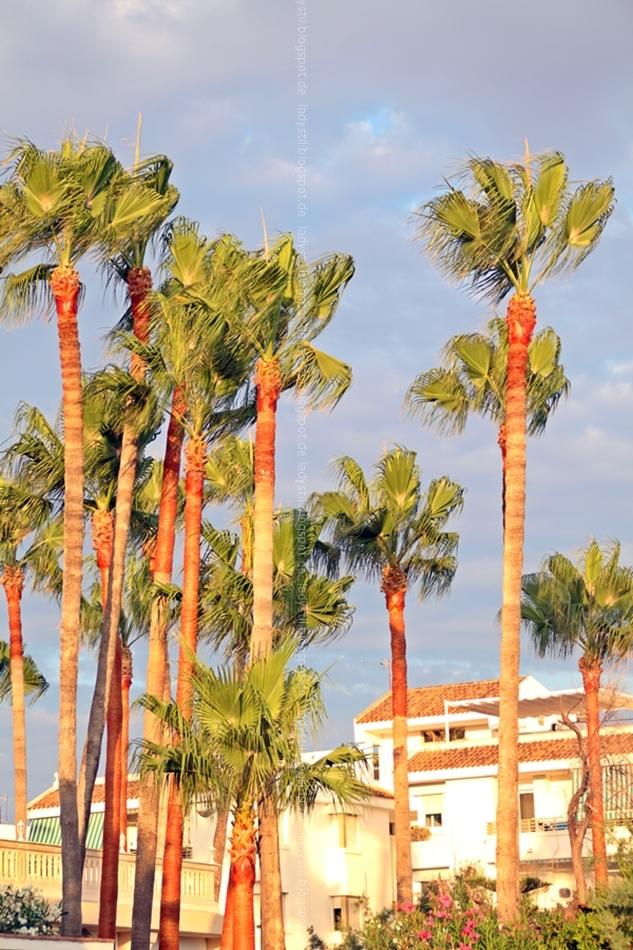 Stimmungsbild Licht der Abendsonne kurz vor dem Untergang spiegelt sich in den Palmen und Häusern