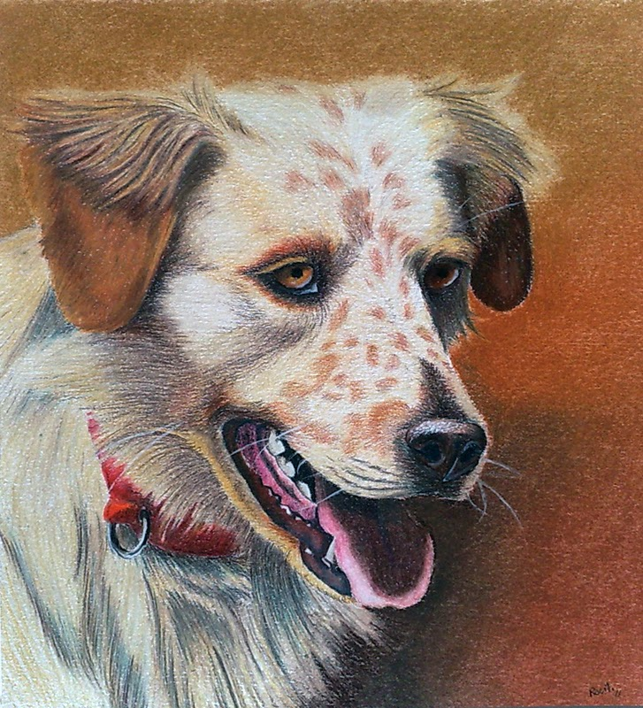 golden retriver derwent fabriano tecnico drawing ritratto cane