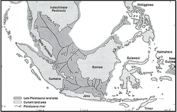 Suku dayak yaitu salah satu suku orisinil Kalimantan yang sangat populer sebab keunikan etn Sejarah Asal Usul Suku Dayak dan Penyebarannya di Kalimantan