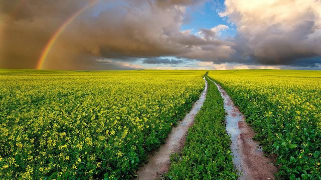 Yellow Fields Path Rainbow HD Wallpaper