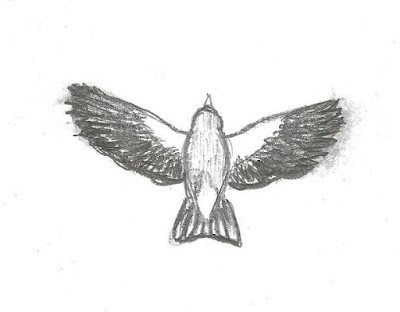 Figure 29: Drawing of American Goldfinch in overhead display flight.
