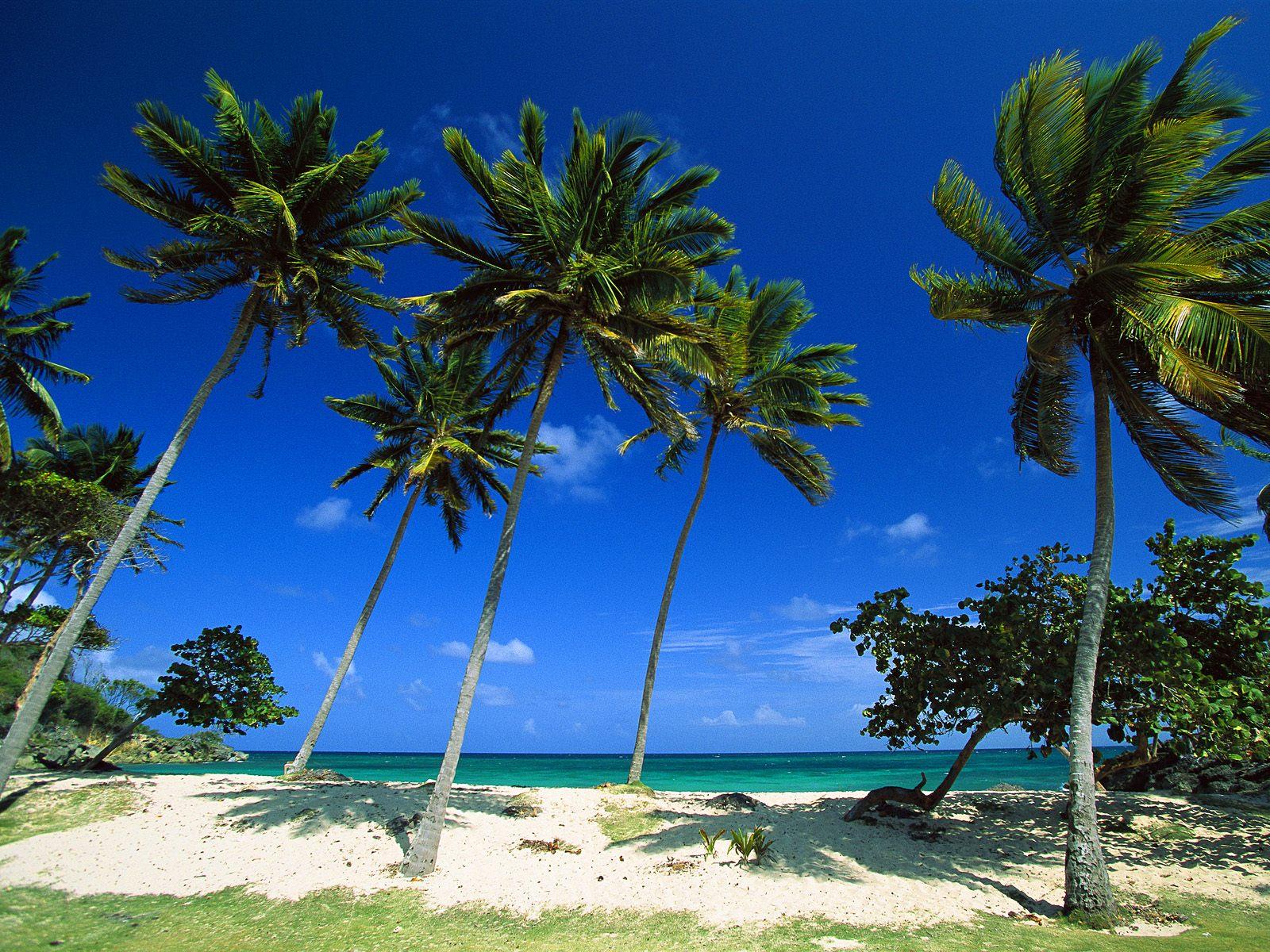 http://2.bp.blogspot.com/-1cEPUnv_Zfw/TwAmrY9wQ3I/AAAAAAAAAc4/JzzS_cj5tvA/s1600/Beach+Bacardi+Beach+Cayo+Levantado+Dominican+Republic.jpg