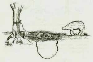 Survival - Jebakan (trap) untuk Binatang