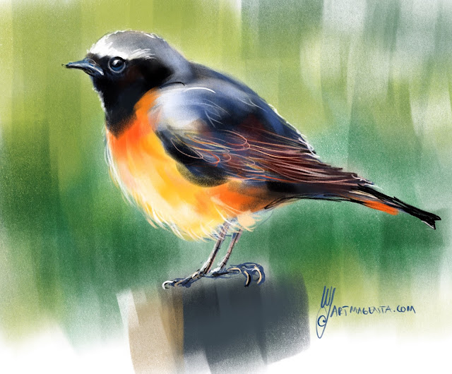 Common Redstart a bird painting by Artmagenta