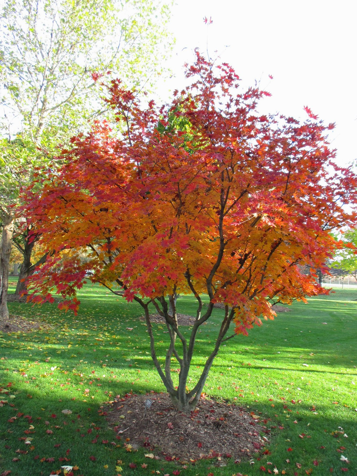 Rotary botanical gardens hort blog full speed ahead for Garden city trees