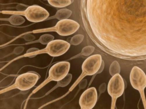 http://www.women-info.com/en/sperm-donation