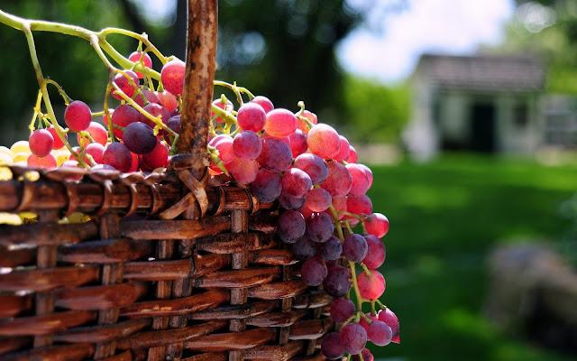 Dvicio Vinos: Diccionario vinícola III: las uvas