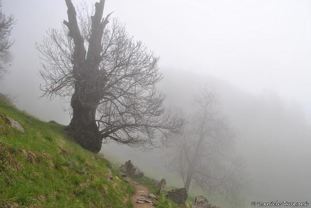 Nebbia - Daniele Trapani