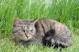 Puutarhanhoito on liian arvokas asia jätettäväksi kissalle