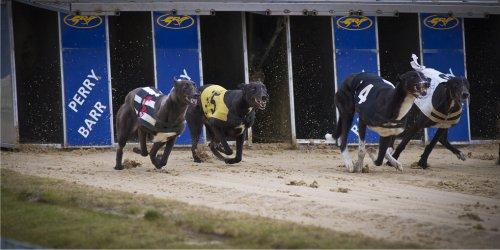 K Billingham Greyhound Chris Allsopp Racing B...