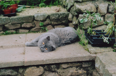 photo of Bix sprawled out on the patio one summer, looking very photogenic