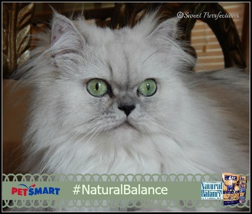 Beautiful, but wild, Truffle #NaturalBalance