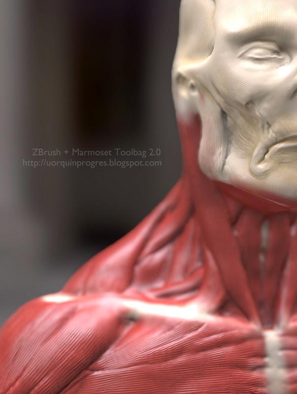 uorquinprogres: Estudio de anatomía muscular & Marmoset Toolbag 2.0