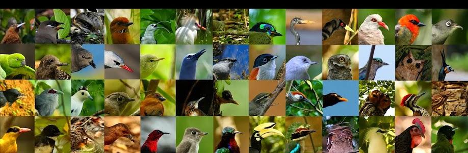 A Conservationist's Birding Blog
