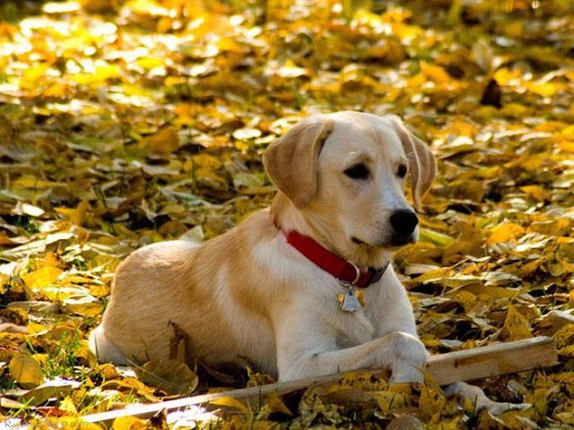 可愛圖片 翻滾吧 在樹葉上玩耍的小狗