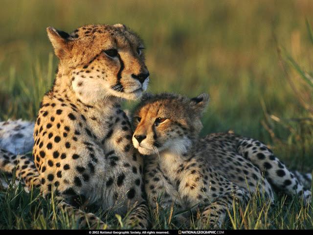 Bebè Tigre con su Mamá