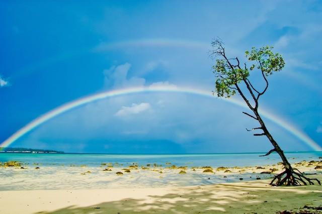 5 Fakta Menakjubkan Tentang Pohon
