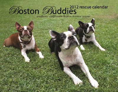 2012 Bston Buddies Rescue Calendar