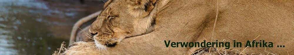 Voor beelden en verhalen over wildlife in Afrika, klik op de leeuw: