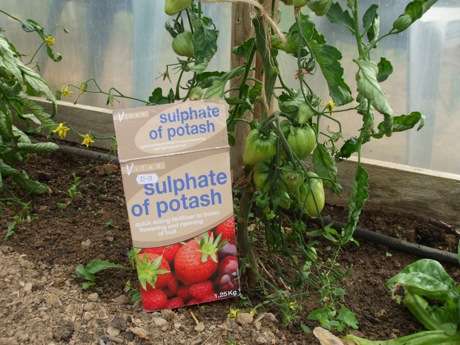 What is the best soil for tomatoes - This Article Summarizes The Key Points Someone Would Need To Know To Successfully Grow Tomato Plants