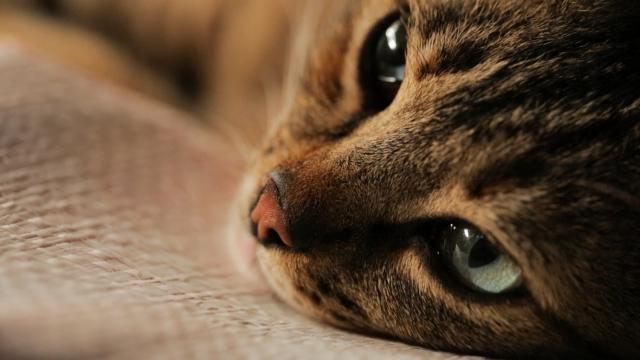 Hình ảnh phim Thế Giới Loài Mèo