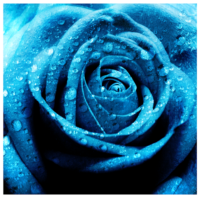 ��� ��� ��� ���� 2013, ��� ����� ��� ���� 2013 Blue_rose_by_kimjaejoong0o.png