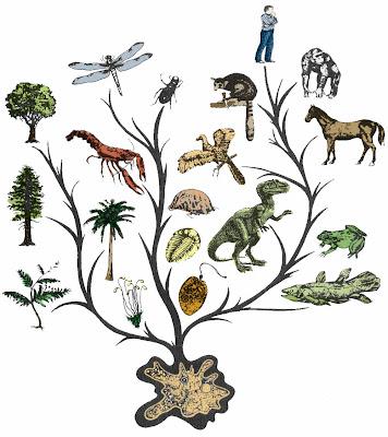 evolution, cambio, aprendizaje