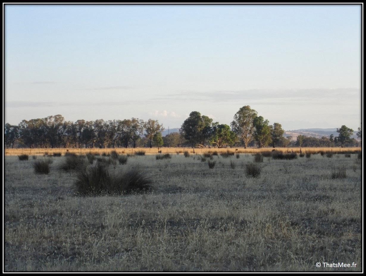 ferme kangourou King Valley Milawa Wangaratta Australie campagne Melbourne