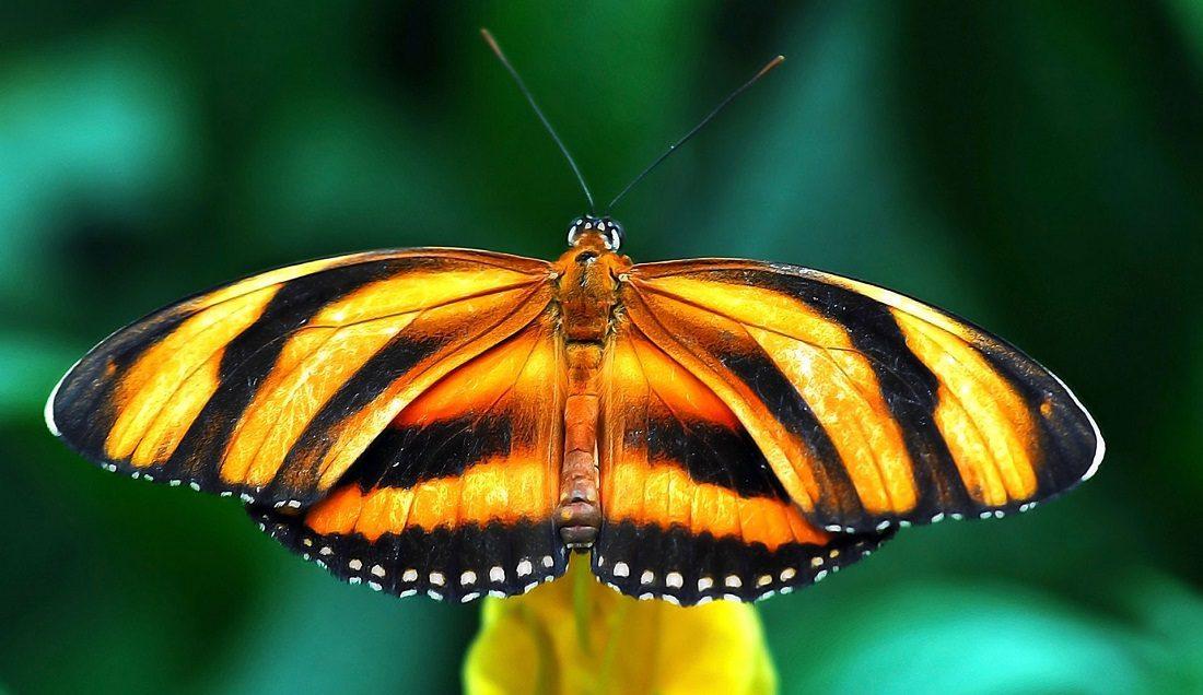 Aprendamos sobre las mariposas