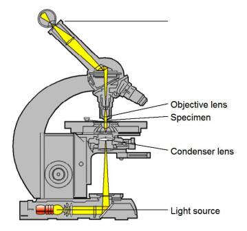 Difference between Light Microscope and Electron Microscope ...