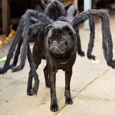 http://puppyintraining.com/the-6-best-dog-costumes-on-the-internet/